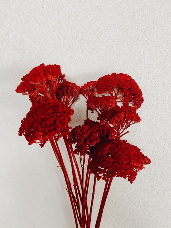 Achillea red / Bund